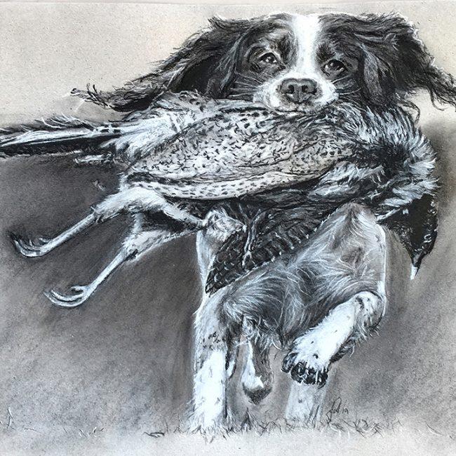 portraettegning_hund_springer_spaniel_drawing_portrait_unikgaveide