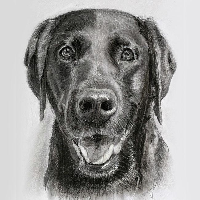 hundeportraet_portraettegning_portraettegner_portraitdrawing_unik_jule_gaveide_dogdrawing